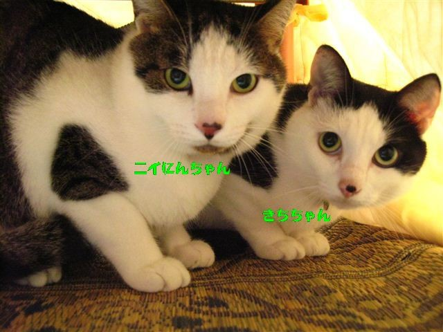 f:id:yasukazu01:20110618101752j:image