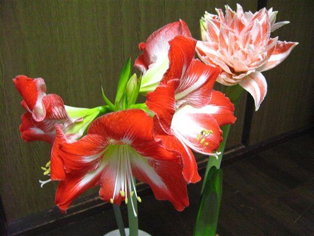 f:id:yasukazu01:20110620214130j:image