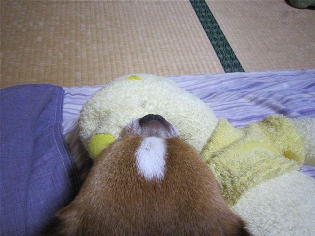 f:id:yasukazu01:20110624235326j:image