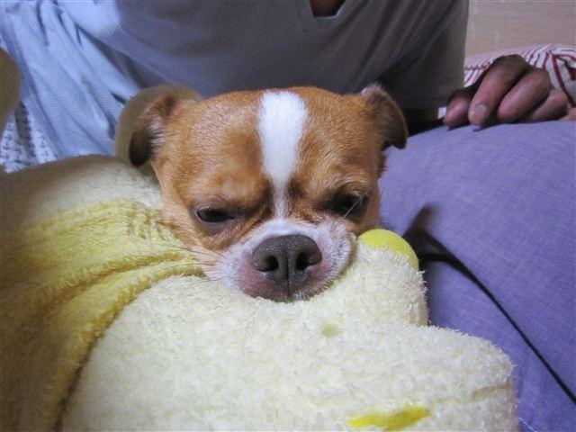 f:id:yasukazu01:20110624235334j:image
