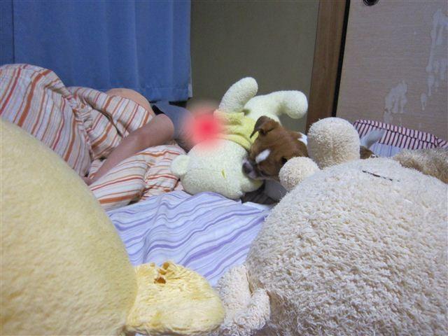 f:id:yasukazu01:20110629232659j:image