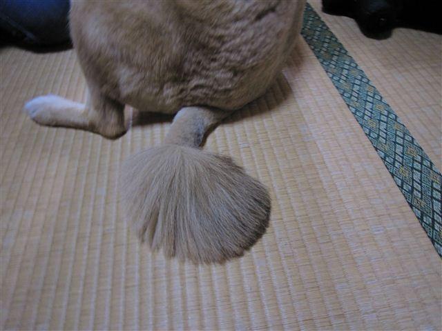 f:id:yasukazu01:20110708115454j:image