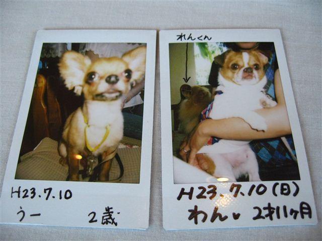 f:id:yasukazu01:20110710141331j:image