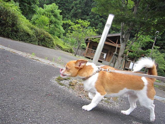 f:id:yasukazu01:20110715114417j:image