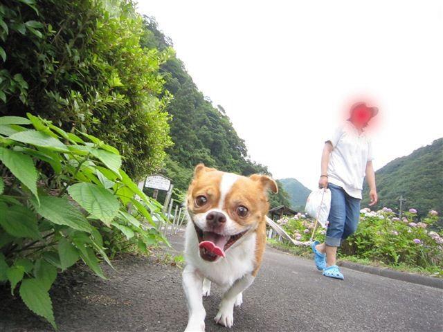 f:id:yasukazu01:20110715114423j:image