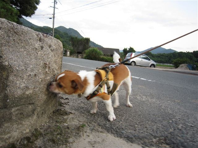 f:id:yasukazu01:20110717191515j:image