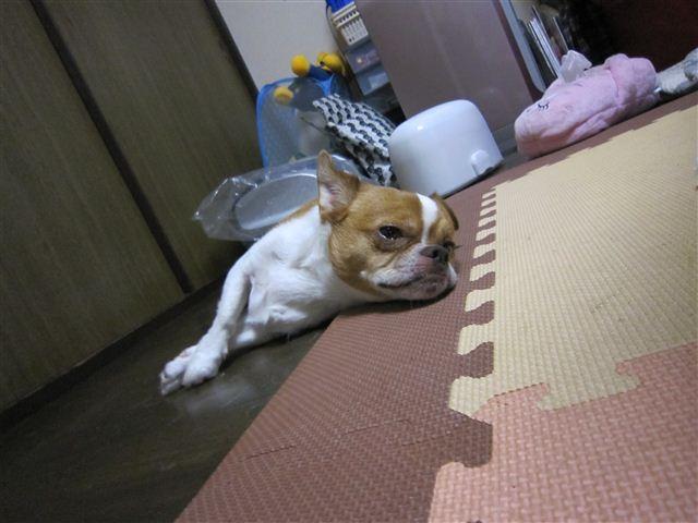 f:id:yasukazu01:20110717193720j:image