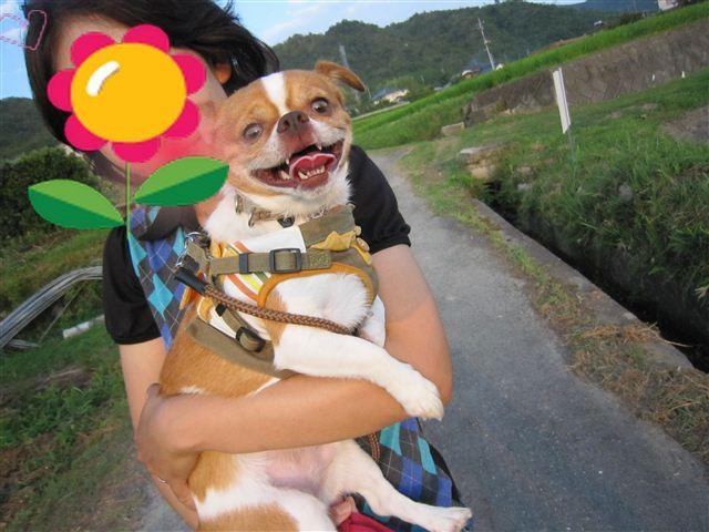 f:id:yasukazu01:20110723182744j:image