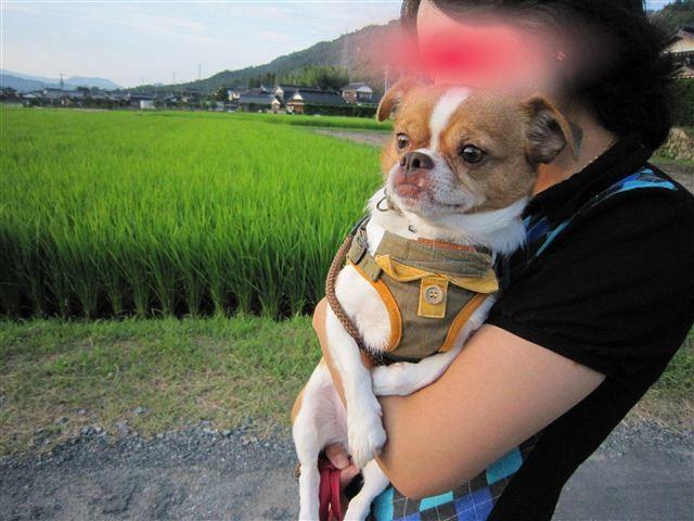 f:id:yasukazu01:20110723182753j:image