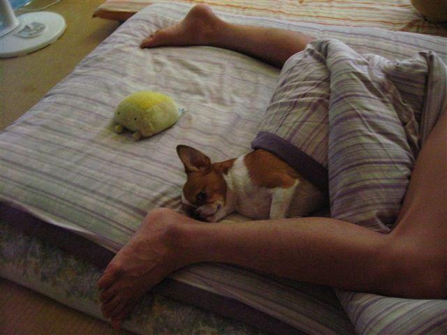 f:id:yasukazu01:20110805163830j:image