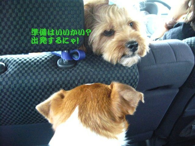 f:id:yasukazu01:20110807102102j:image