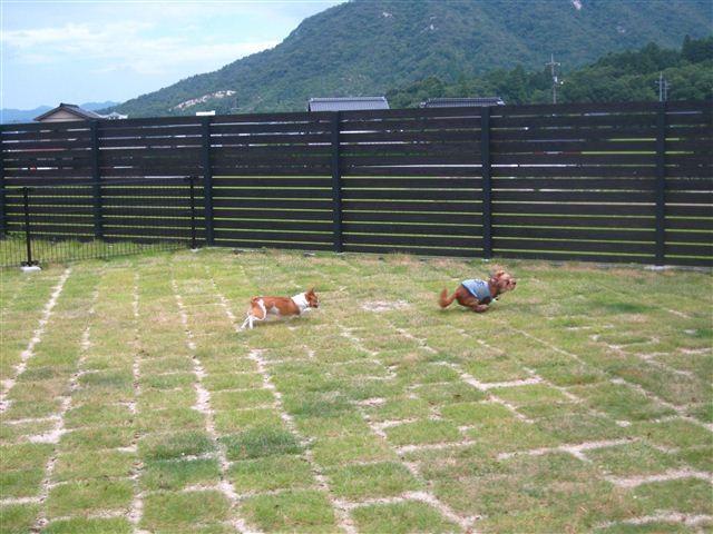 f:id:yasukazu01:20110814102700j:image