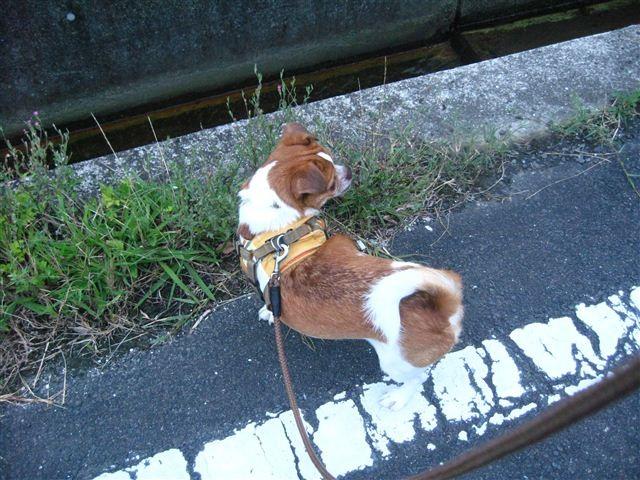 f:id:yasukazu01:20110820183806j:image