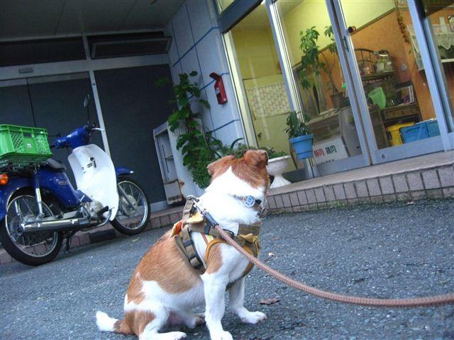 f:id:yasukazu01:20110824181448j:image