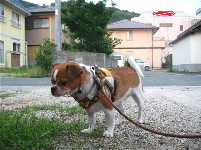 f:id:yasukazu01:20110825183222j:image