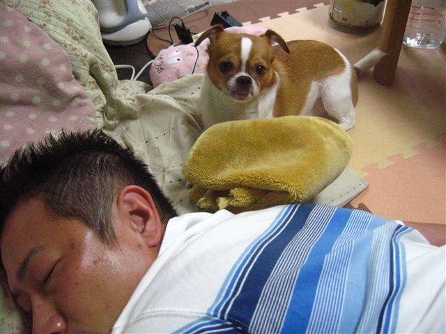 f:id:yasukazu01:20110827184853j:image