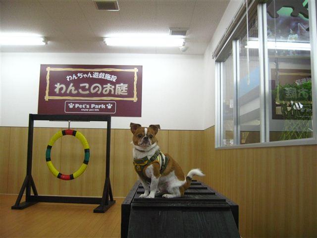f:id:yasukazu01:20110912111738j:image