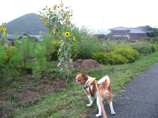 f:id:yasukazu01:20110919171416j:image