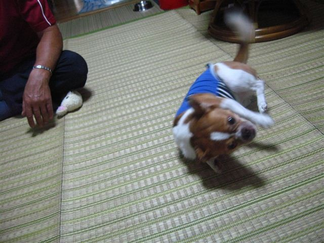 f:id:yasukazu01:20110925143702j:image