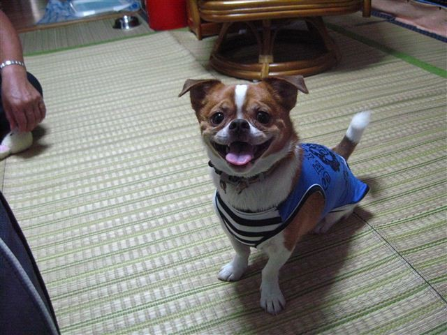 f:id:yasukazu01:20110925143740j:image