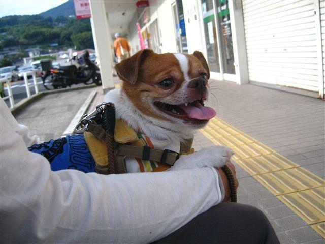 f:id:yasukazu01:20110925154858j:image