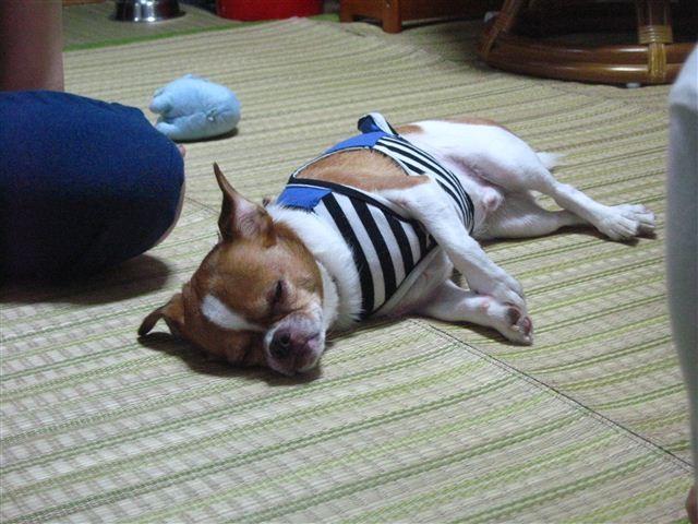 f:id:yasukazu01:20110925163344j:image