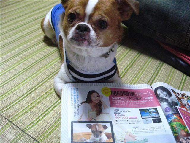 f:id:yasukazu01:20110926104533j:image