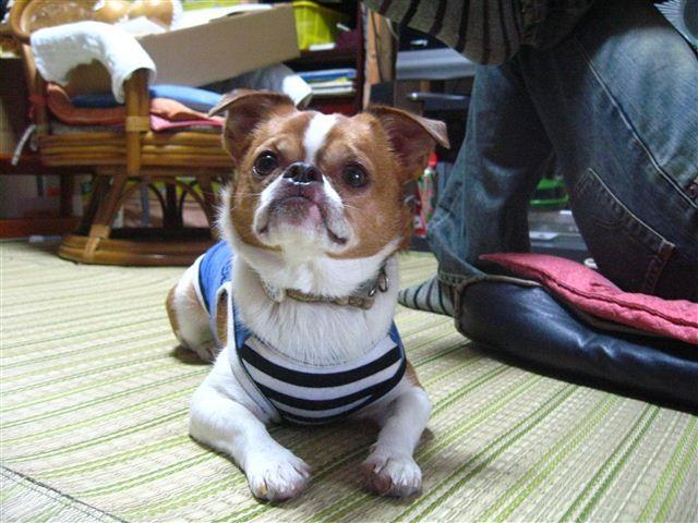 f:id:yasukazu01:20110926104640j:image