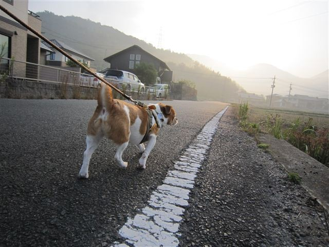 f:id:yasukazu01:20111010072549j:image