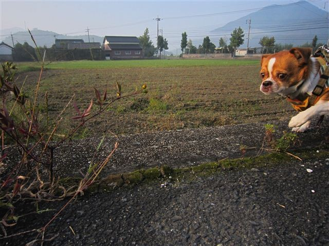 f:id:yasukazu01:20111010072637j:image