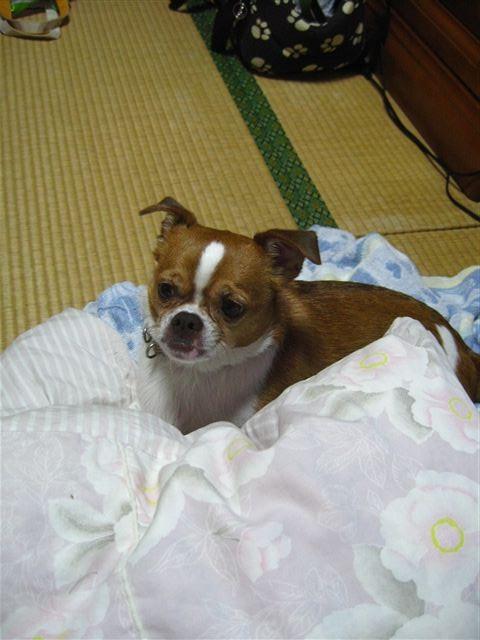 f:id:yasukazu01:20111010211708j:image