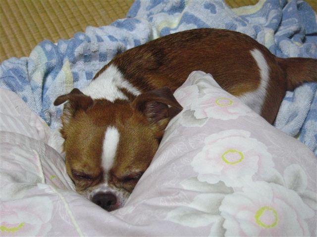 f:id:yasukazu01:20111010211922j:image