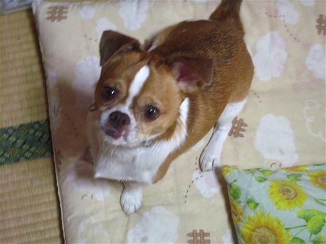 f:id:yasukazu01:20111011113454j:image