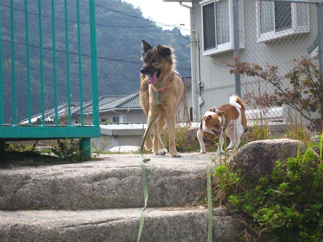 f:id:yasukazu01:20111011123915j:image