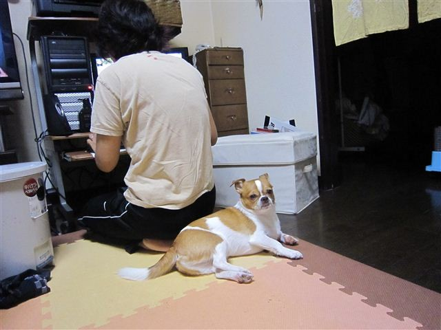 f:id:yasukazu01:20111014183532j:image