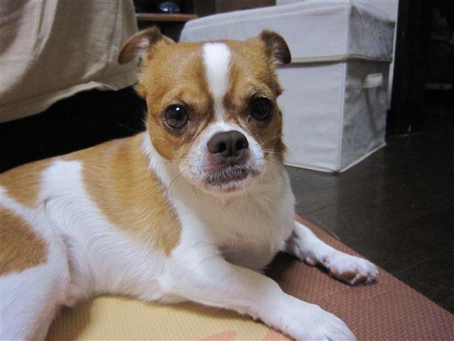 f:id:yasukazu01:20111014183611j:image