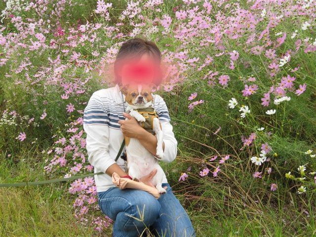 f:id:yasukazu01:20111017124146j:image