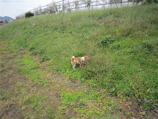 f:id:yasukazu01:20111017124604j:image