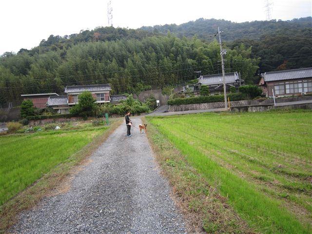 f:id:yasukazu01:20111029131551j:image