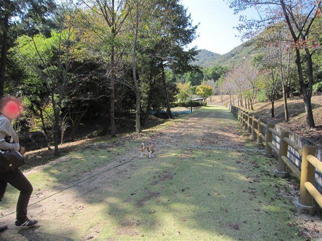 f:id:yasukazu01:20111101112059j:image
