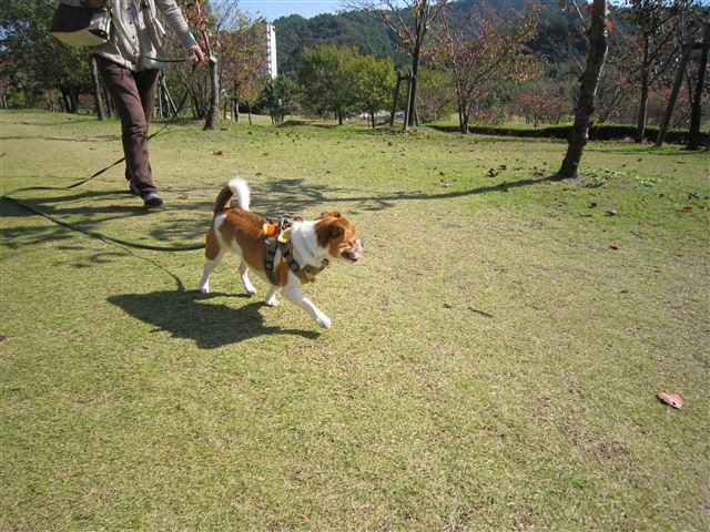 f:id:yasukazu01:20111101113143j:image