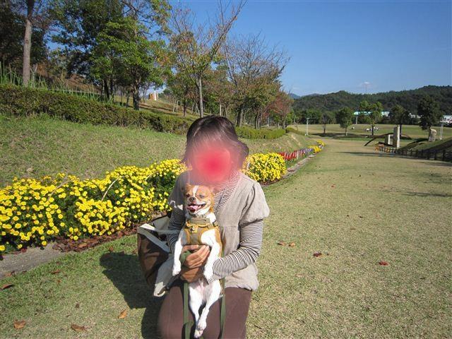 f:id:yasukazu01:20111101113357j:image