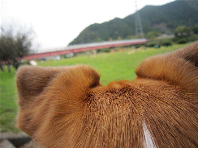 f:id:yasukazu01:20111103123258j:image