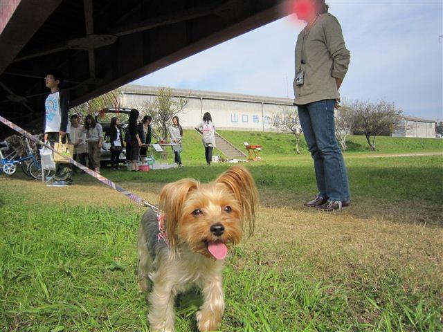 f:id:yasukazu01:20111103130706j:image