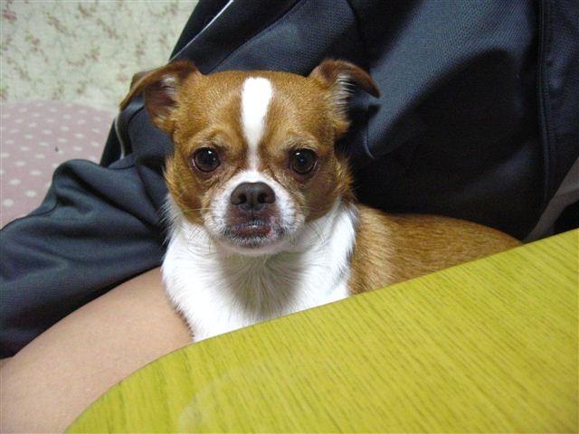 f:id:yasukazu01:20111110211403j:image