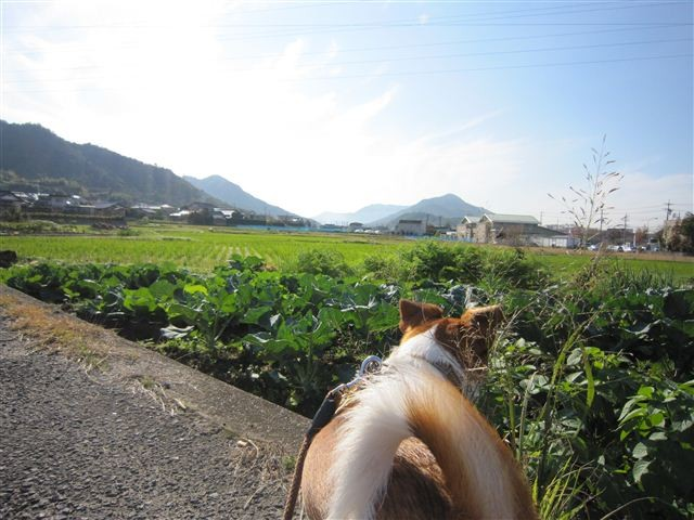 f:id:yasukazu01:20111112094413j:image