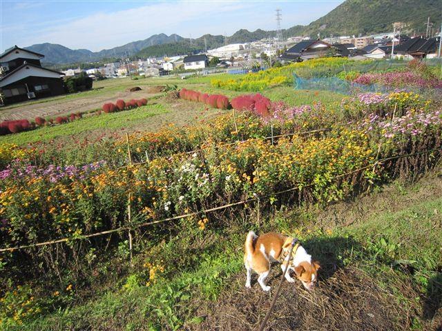 f:id:yasukazu01:20111112095032j:image
