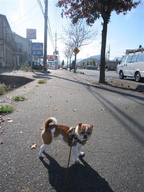 f:id:yasukazu01:20111112095926j:image