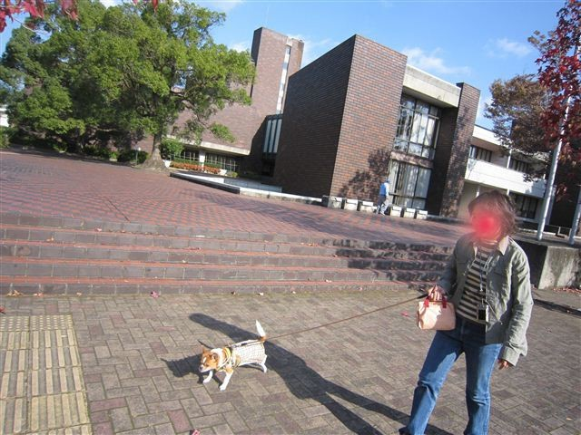 f:id:yasukazu01:20111115102043j:image