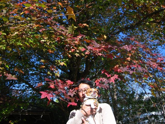 f:id:yasukazu01:20111115102823j:image